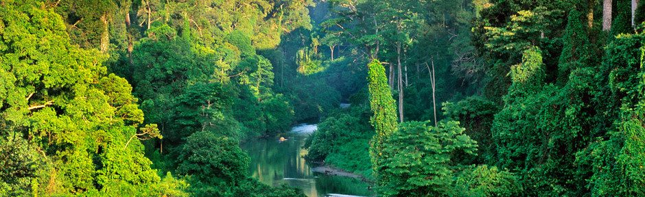 Sabah State, Borneo, Malaysia --- River in the lowland rainforest of the Danum Valley on Borneo, Sabah State, Malaysia. --- Image by © Frans Lanting/Corbis